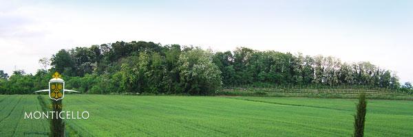Territorio e Presentazione Azienda Vitivinicola Vini Monticello - Due Carrare Colli Euganei Padova